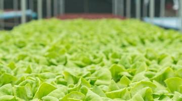 Vollautomatische Salatfabrik