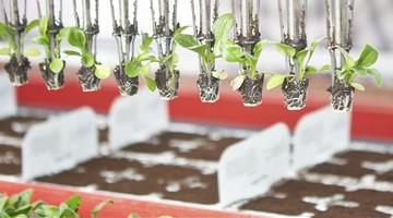 Automatisierte Agrarwirtschaft