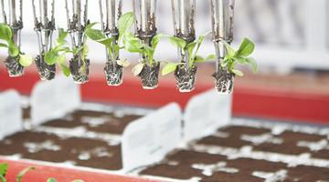 Automatisierung in der Agrarwirtschaft