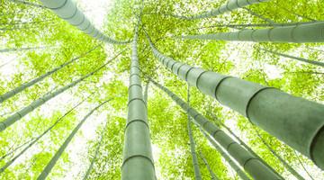 Bambus: Großer Wunderwerkstoff der Zukunft?